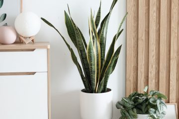 eco furniture with plants