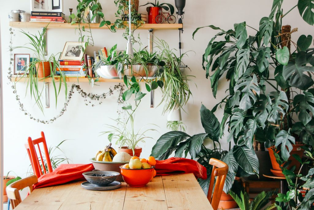 dining room with plants in it